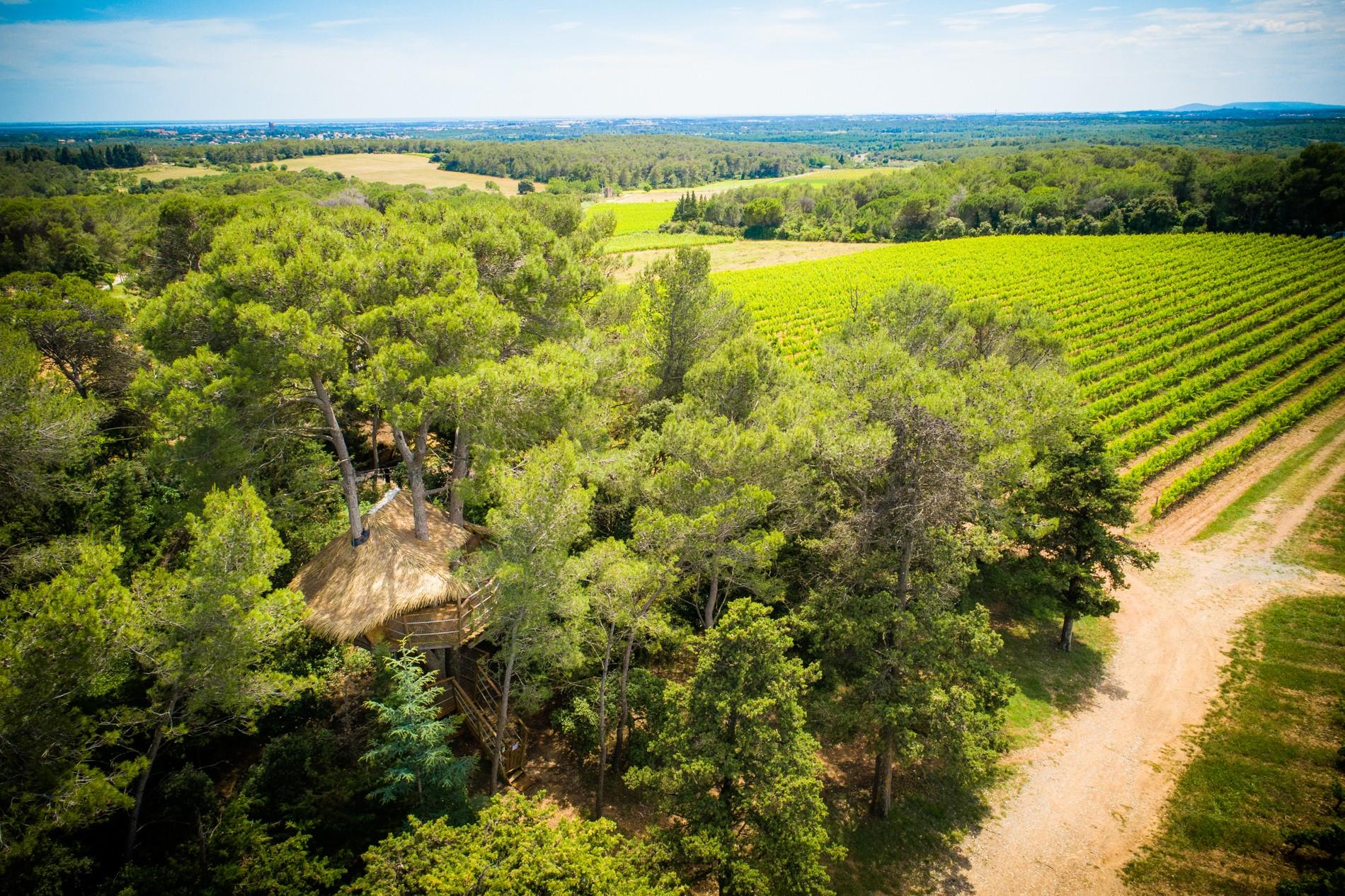 Photo 21 extérieur - cabane dans les arbres - vue sur vignoble - hébergement insolite à Montpellier - Oenotourisme - Domaine saint Jean de l'Arbousier, Castries, Hérault