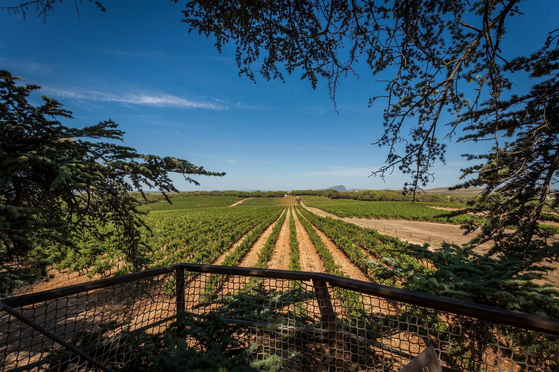 Photo 14 extérieur - Cabanes dans les arbres - Vue sur les vignes depuis la terrasse -hébergement insolite à Montpellier - Tourisme de nature - Domaine saint Jean de l'Arbousier, Castries, Hérault